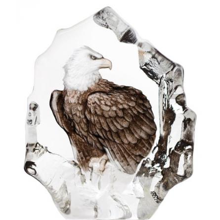 Wildlife Bald Eagle