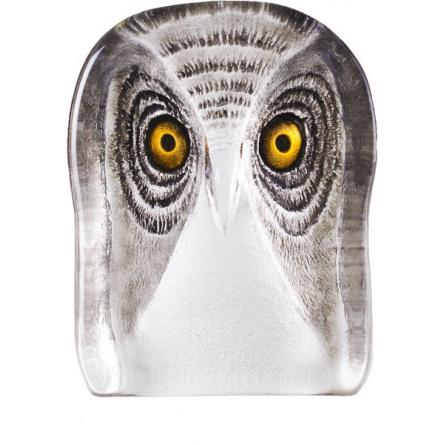 Owl, medium
