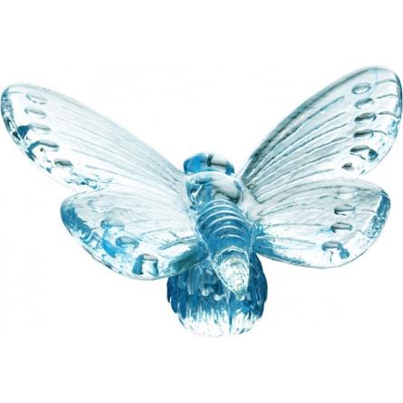Papilio blå