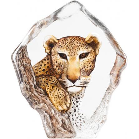 The Big Five Leopard